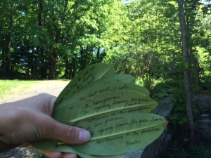 Notes on leaves. May 2015